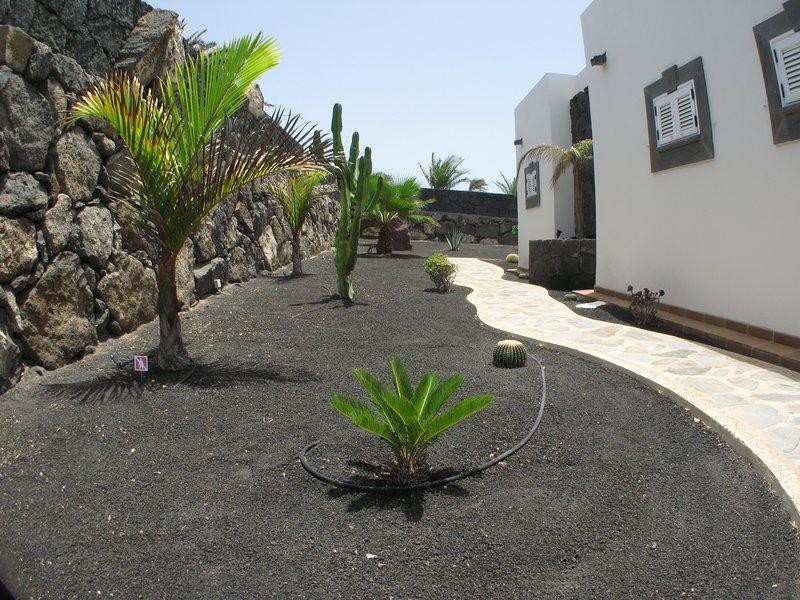 Exotic plants in garden