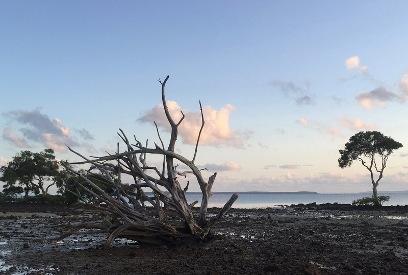 Stroll around the Island's many beaches or wander through the Mangroves
