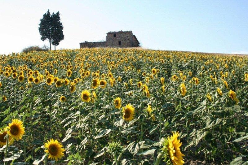Casale d'Orcia_Castiglione d'Orcia_31