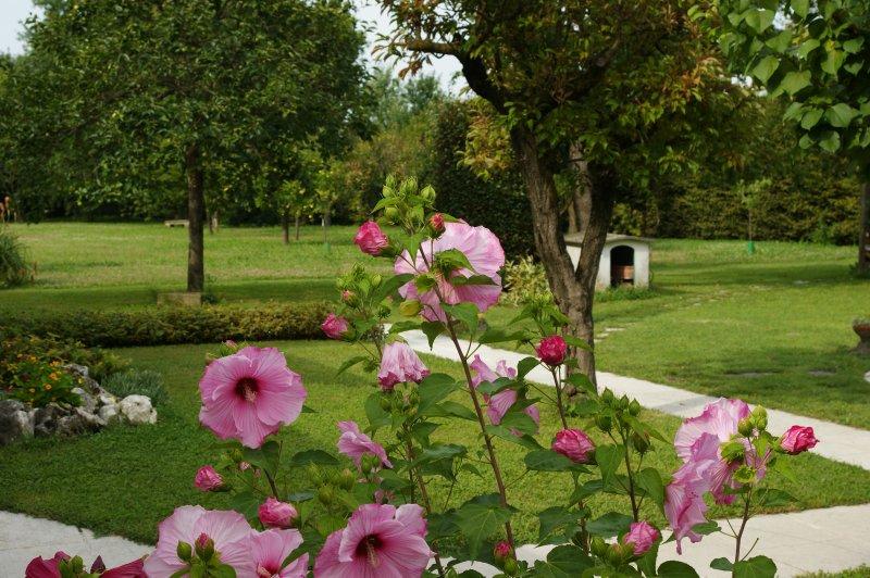 manor Garden