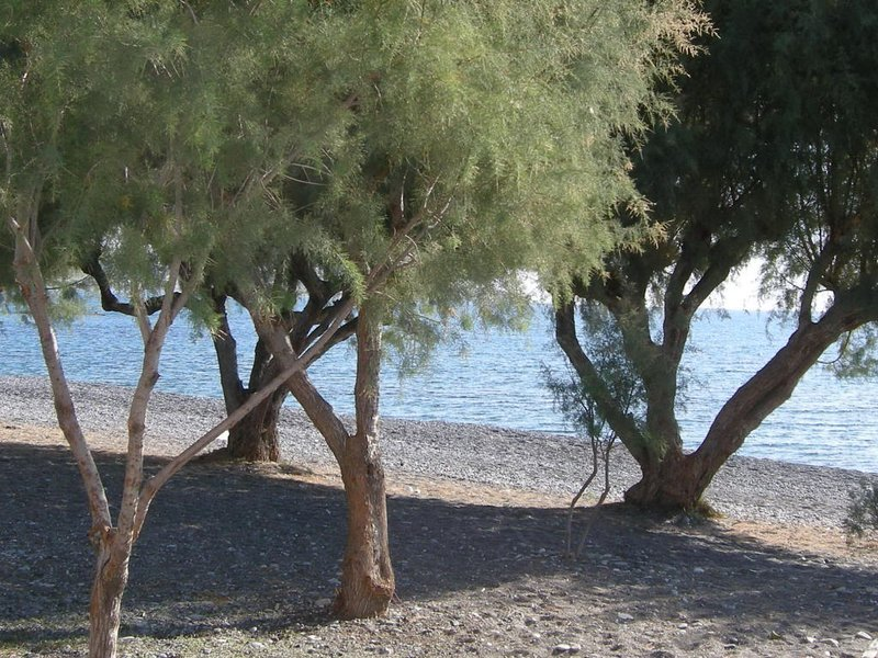 Beach of Ierapetra