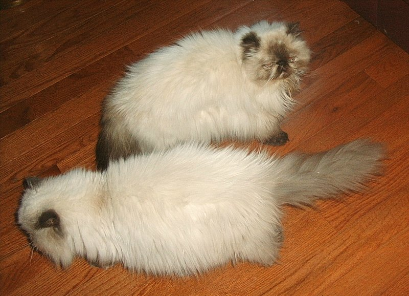 """Cats """"um"""" e """"dois"""" são muitas vezes aqui."""