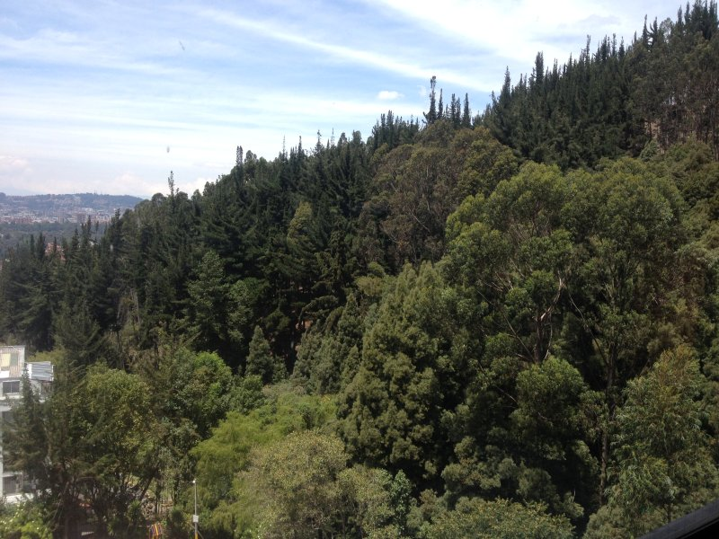 NATIVE FOREST excellent view