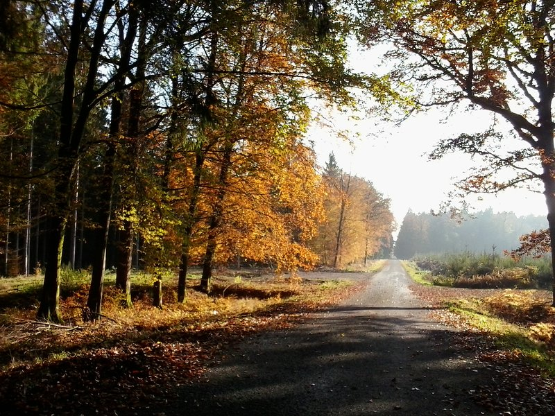 the autumn way home