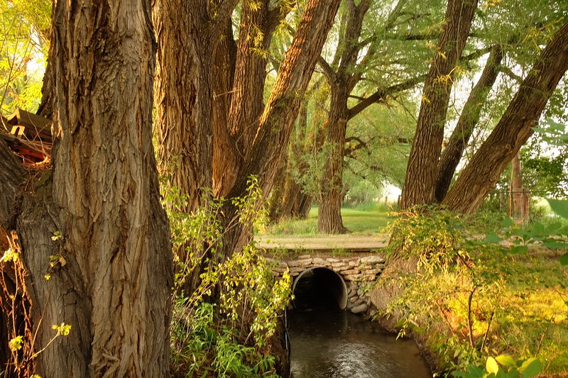 ponte vialetto sopra Cedar Creek.