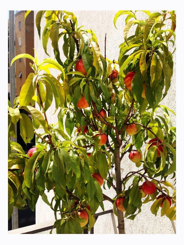 Il nostro Peach Trees