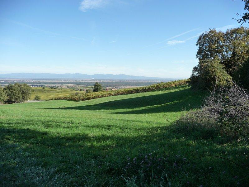 View of the Plaine d'Alsace