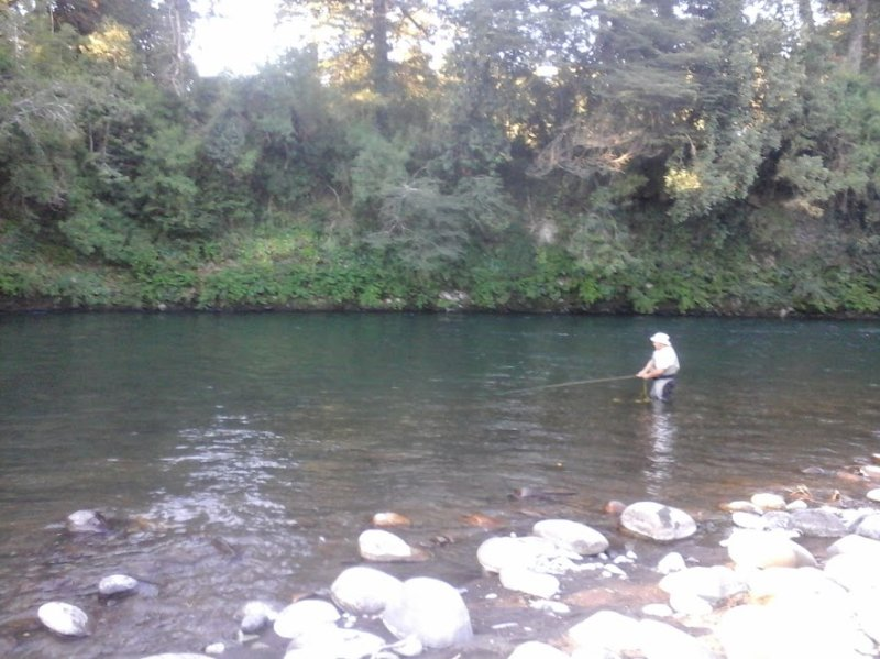 Fly fishing in common area. Trout and salmon