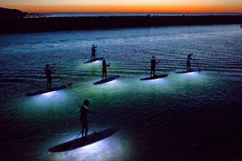 aguas bioluminiscentes en Indian River, Río Plátano, y la Laguna Mosquito.