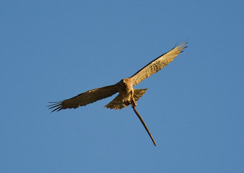 Fascinating Fauna to be seen at the Villa. From colorful Dragonflies to soaring Eagles.