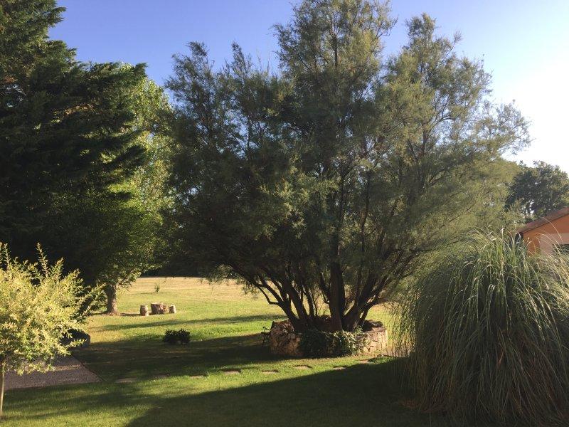 garden in the sun ocher avignon