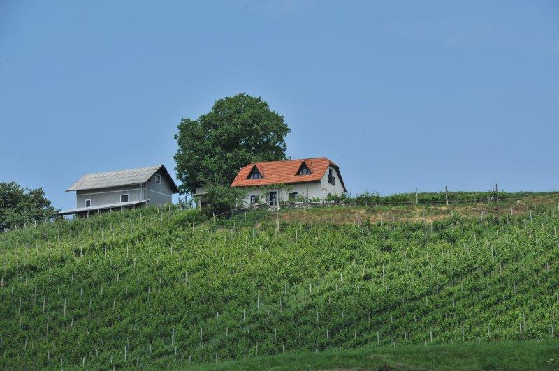 Vineyard Cottage Zdolsek, location de vacances à Slovenska Bistrica