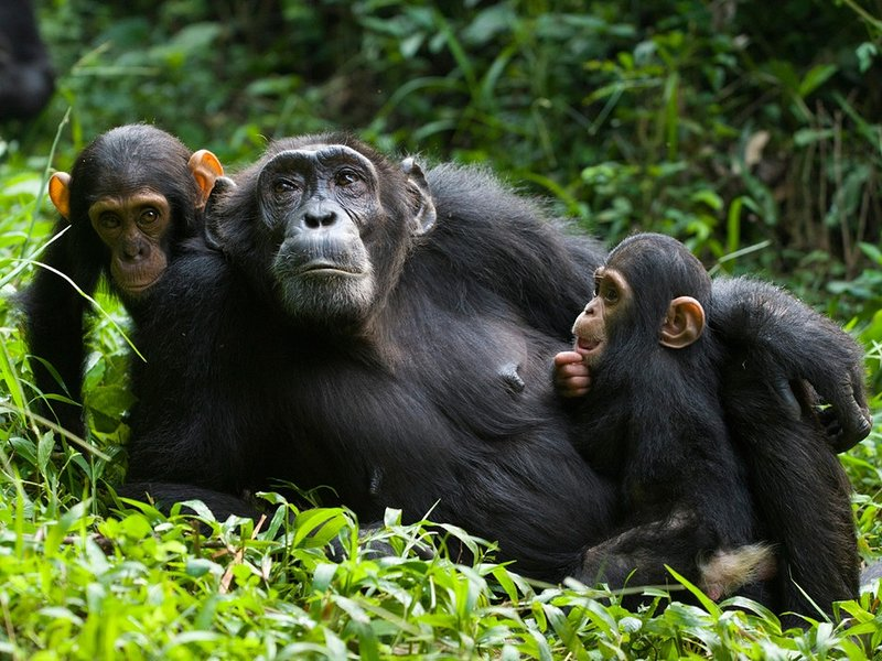 We can make your holiday a memorable one take a trip at see the chimpazes just 20 kms away