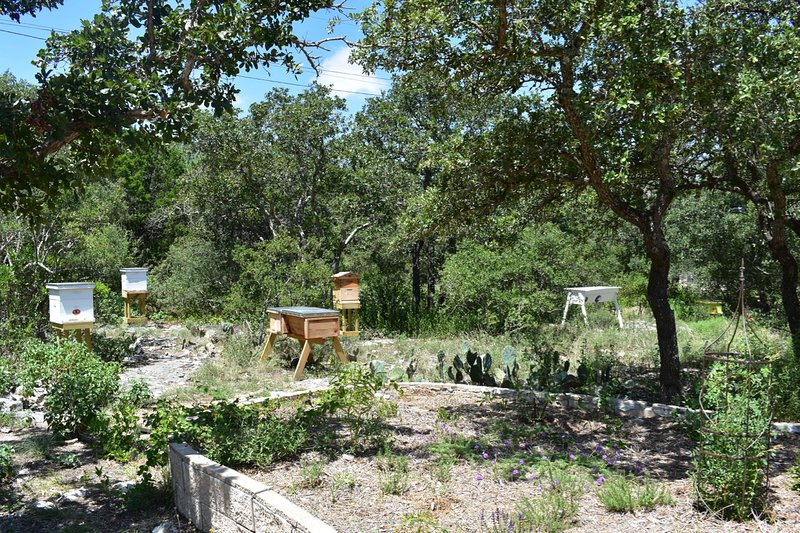 O apiário nos jardins nativos.