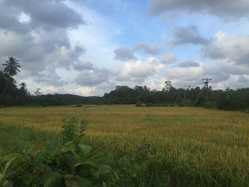 Green Village Sewanagala, holiday rental in Embilipitiya