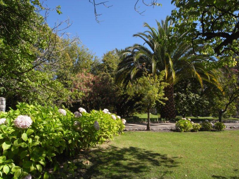 Hydrangeas in full bloom in the Casa Ishi garden