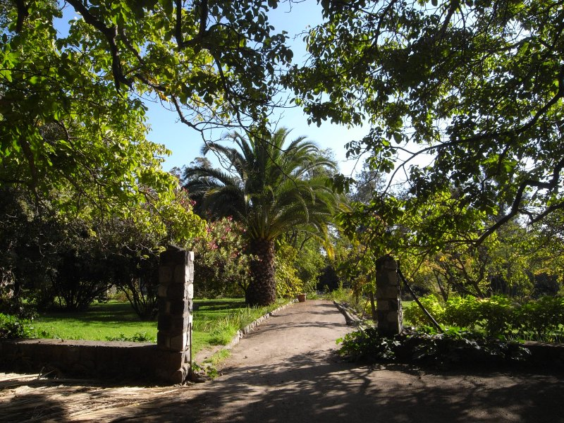 Majestic palm trees in the Casa Ishi Villa garden