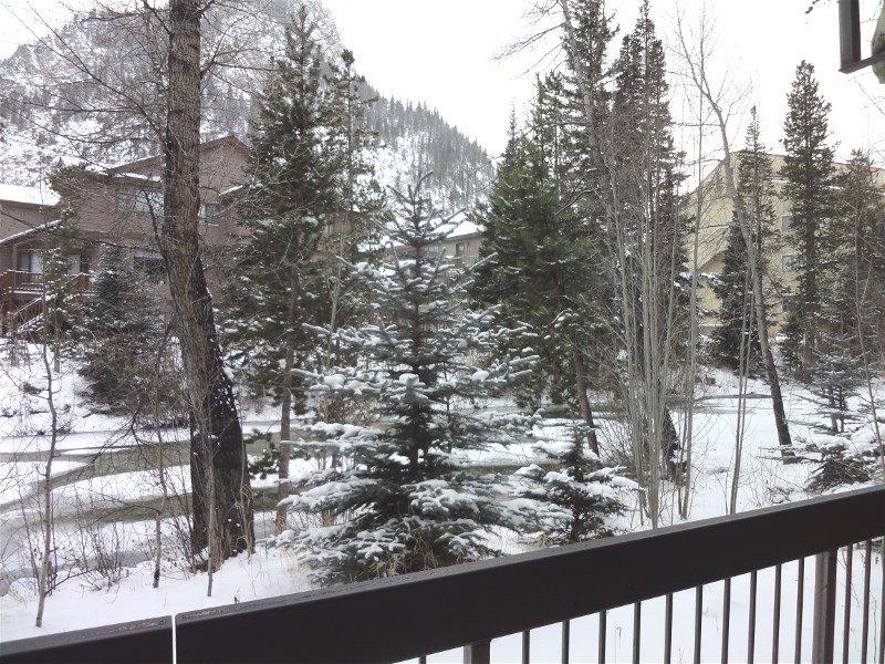 Railing,Fir,Outdoors,Snow,Forest