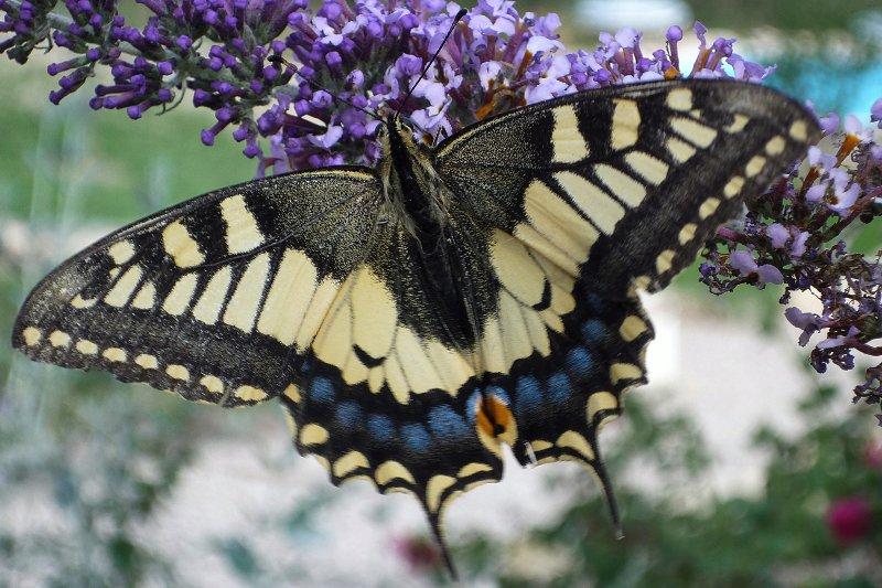 Onze bloeiende tuinen trekken bijen en vlinders