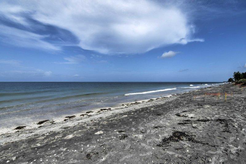 Le condo se trouve à seulement 100 pieds de cette plage privée!