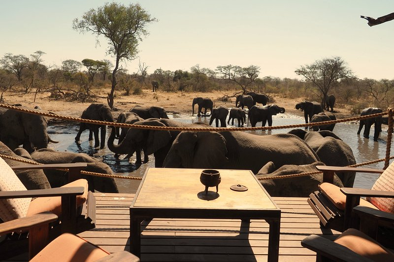 South Okavango | Omogolo Bush Lodges - Best close-up elephant observations!, vacation rental in North-West District