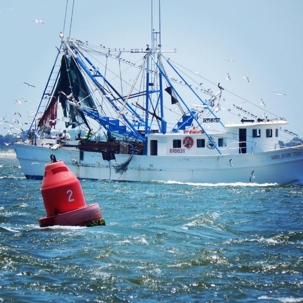 Buy your shrimp locally  - support our fleet ! They bring the seafood into Shem Creek.