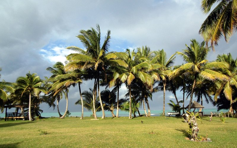 The garden and coconut trees