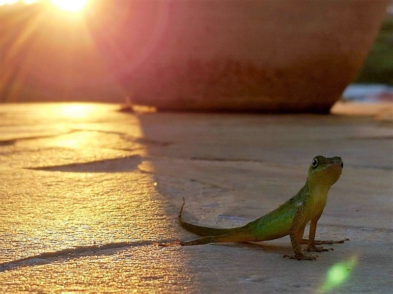 Oscar o lagarto