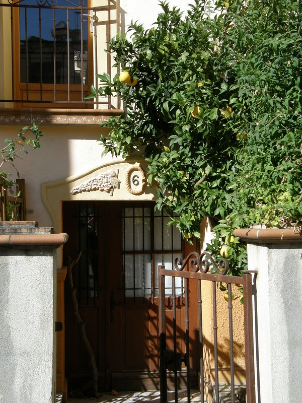 front entrance with orange tree