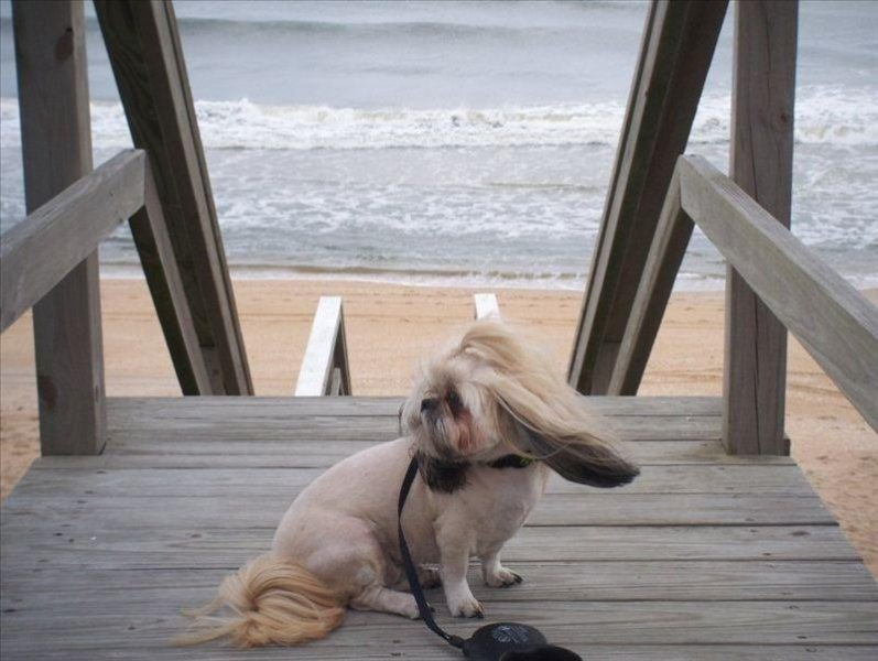 CoCo enjoying the Ocean Breeze on the Community Boardwalk!