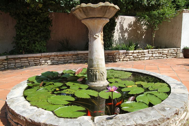 Patio - Fishpond