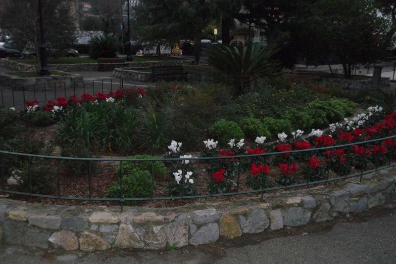 Aiola input front gardens