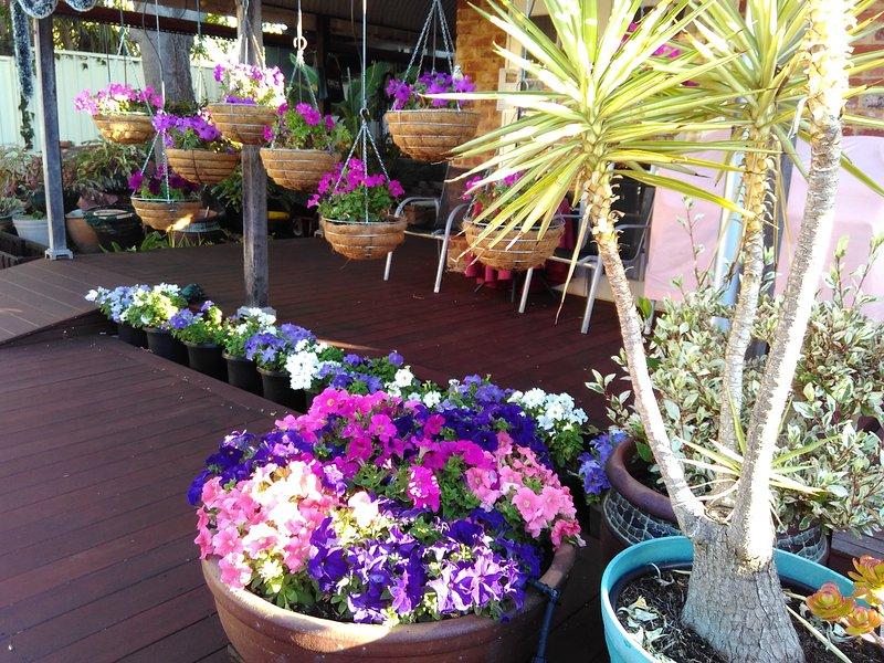 Ein weiterer Blick auf Hängekörbe und Topfpflanzen