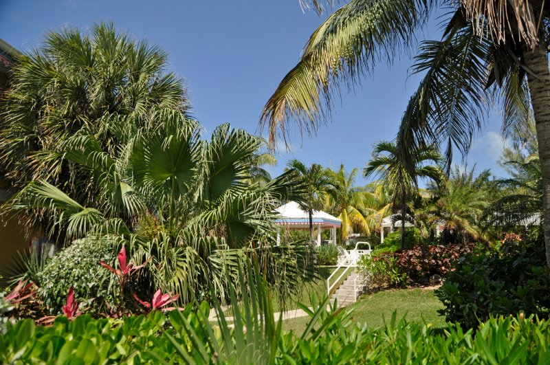 The tropically-landscaped gardens of Coconut Bay