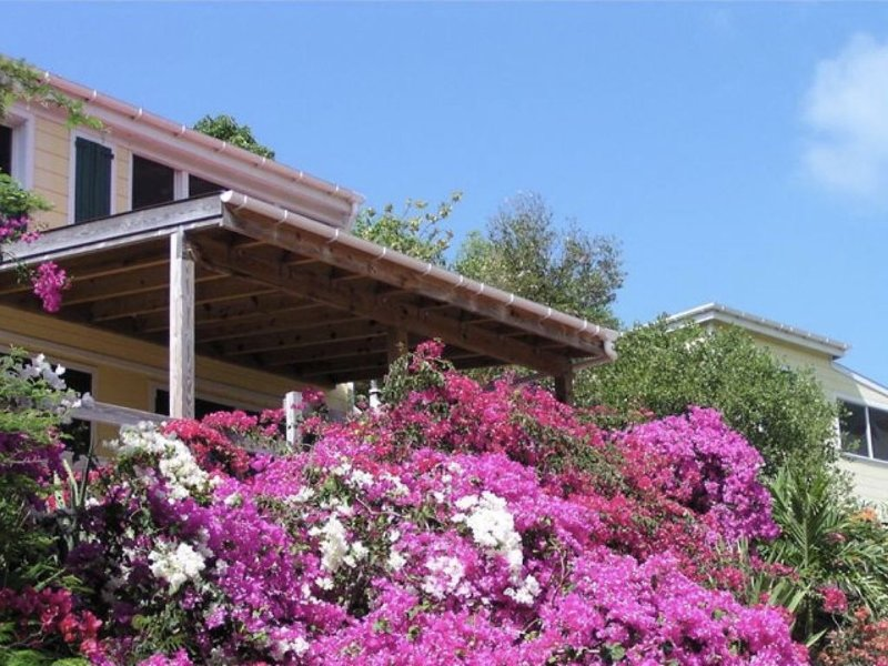 Bougainvillea in front of the Main House Cottage