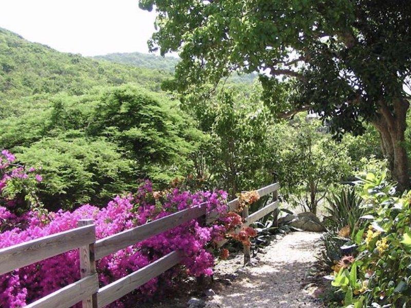 El camino del jardín