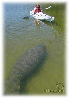 Achten Sie auf Manatee in der Nähe von unserem Dock!