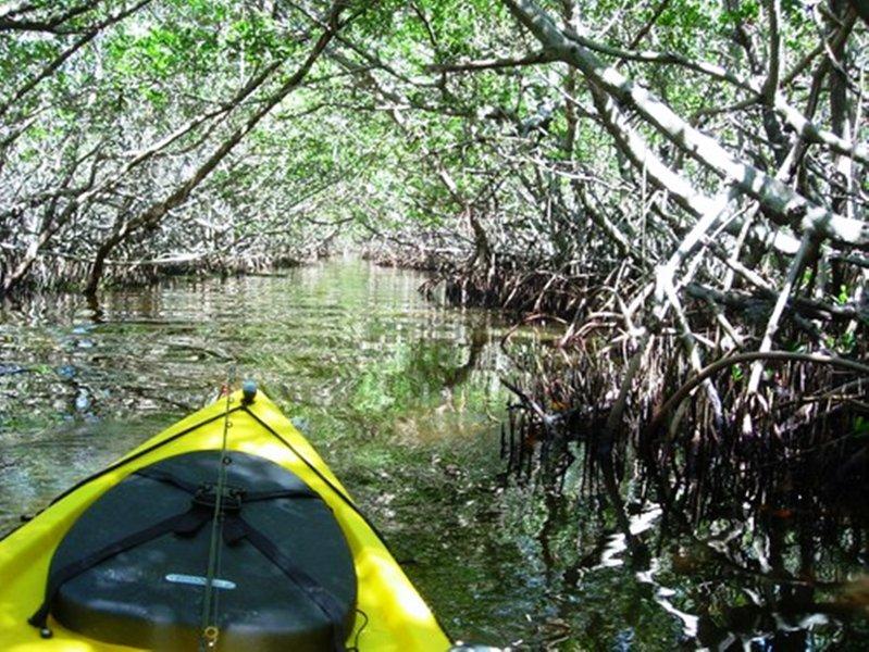 Wij bieden korting code voor kajaks. Neem je eigen eco-tour naar het nabijgelegen leffis sleutel mangrove tunnel!