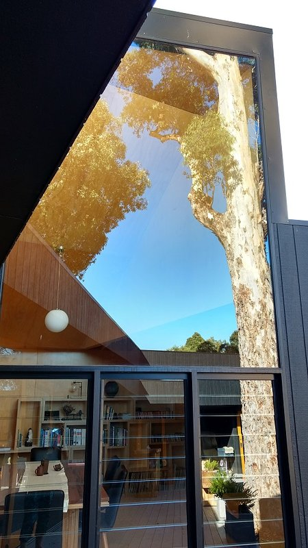 Der prächtige Karri Baum wird auf der ansteigenden Skillion Fenster reflektiert.