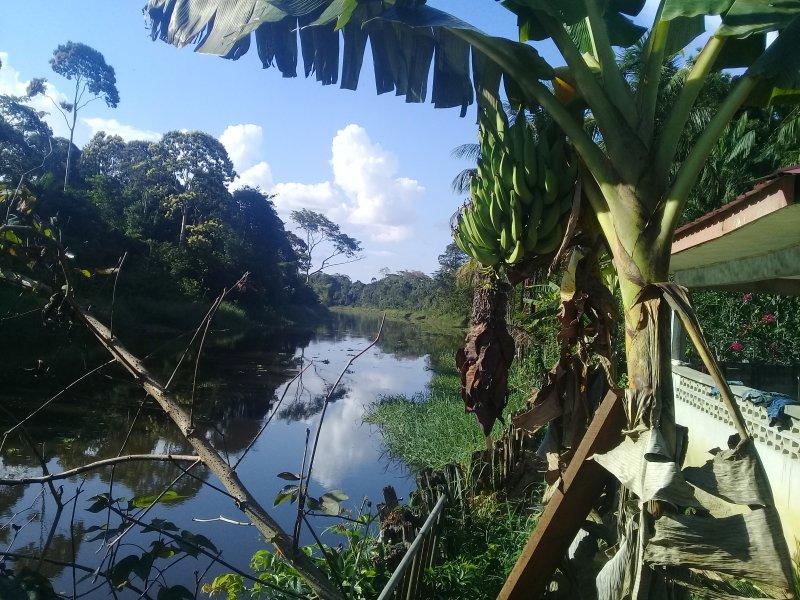 Ver Pará Creek.