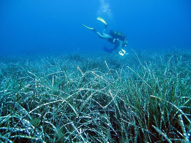 scuba diving nearby