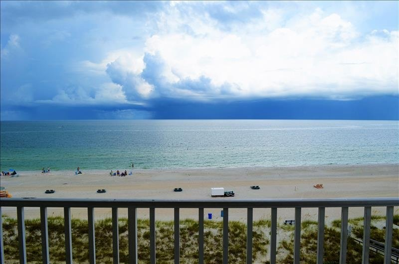 see dolphins from your balcony