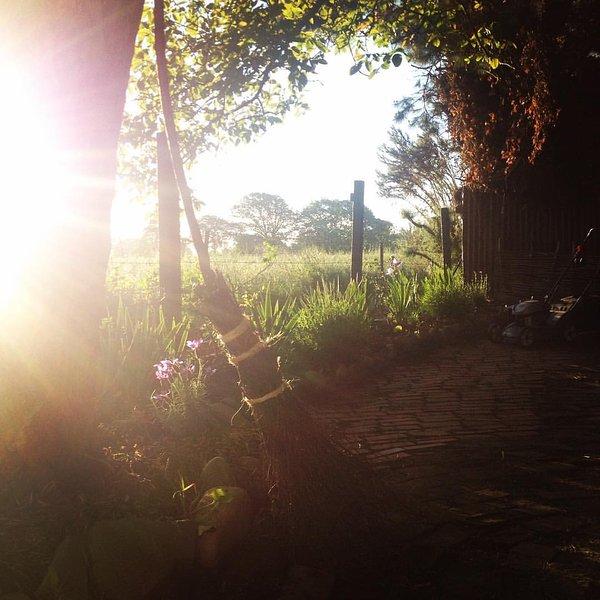 Evening light under the walnut tree
