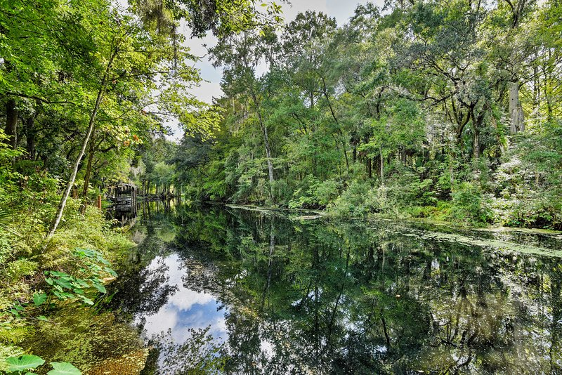 The river is lined with cypress trees, Spanish moss & an abundance of wildlife!