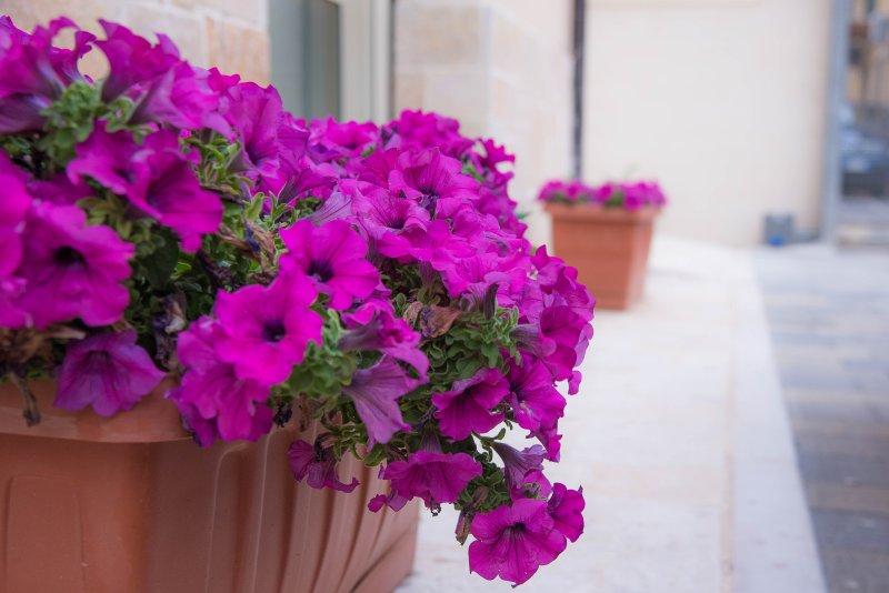 'Il Giardinetto', location de vacances à Matera