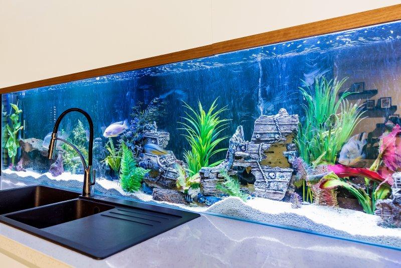 Construido en el tanque de pescados como se ve en Chanel 7