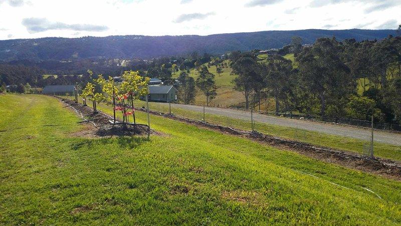 Vues de montagne, couchers de soleil, les vignes de raisin, les figues et plus