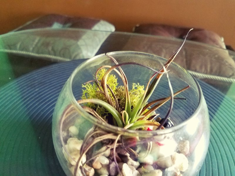 Quarto vem com uma planta para lhe trazer energia positiva e muita boa sorte.