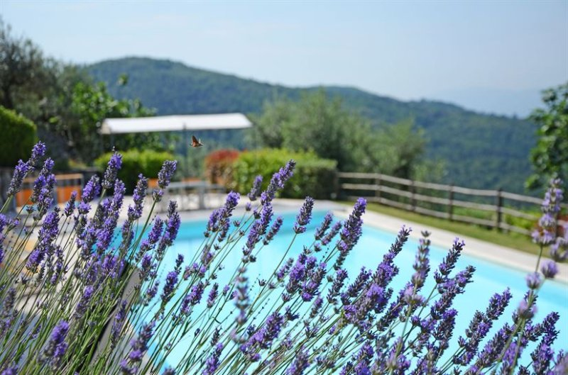 Luxury Tuscan Villa b/w Florence&Pisa, Air/Cond,Large Pool,great views, max 14pp, holiday rental in San Momme