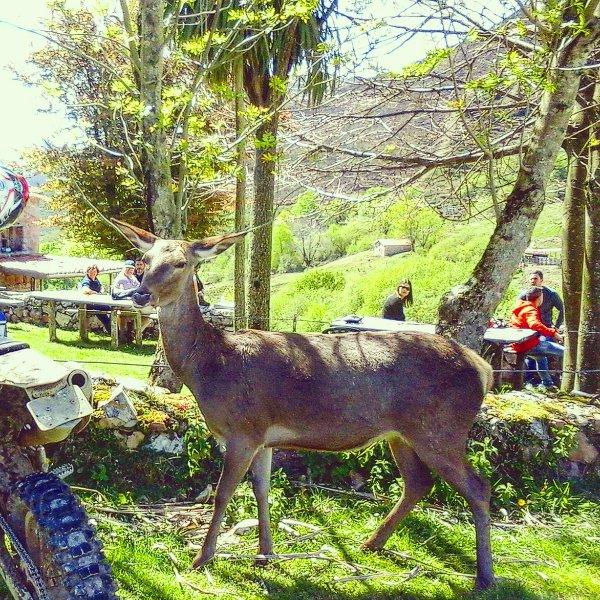 En el bar Les praeres,  Sierra de Peñamayor 7KM de la casa.Y Bambi  nuestra amiga